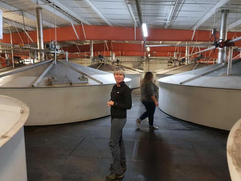 Fermentation tuns in the Jim Beam Distillery