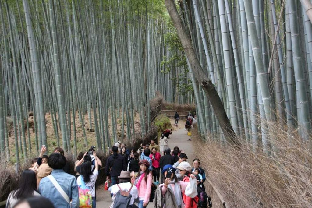 Crowds in the bamboo forest