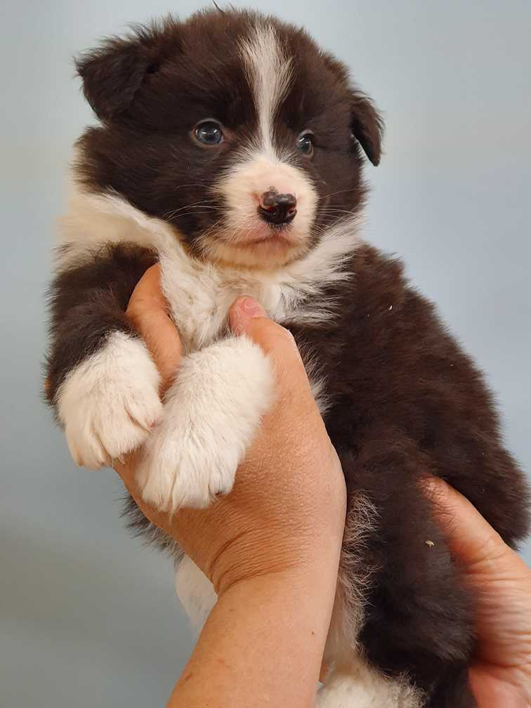 Puppy held up for photo