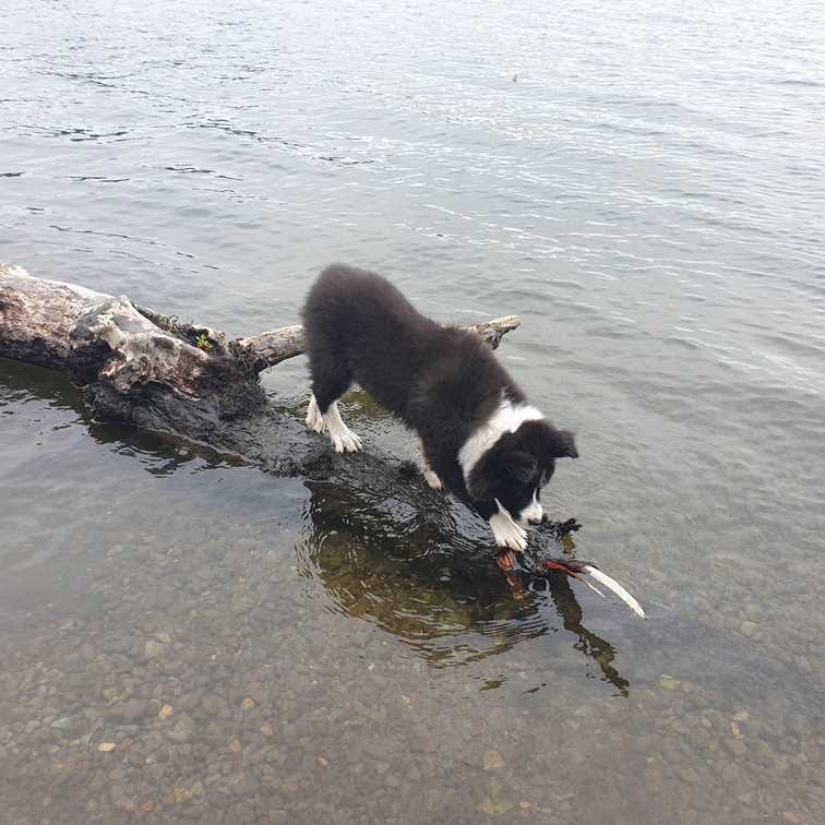 Jasper at the water