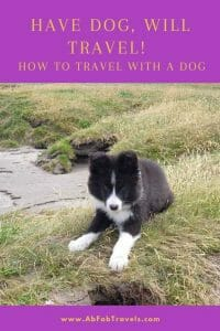 Pin for Travel Dog