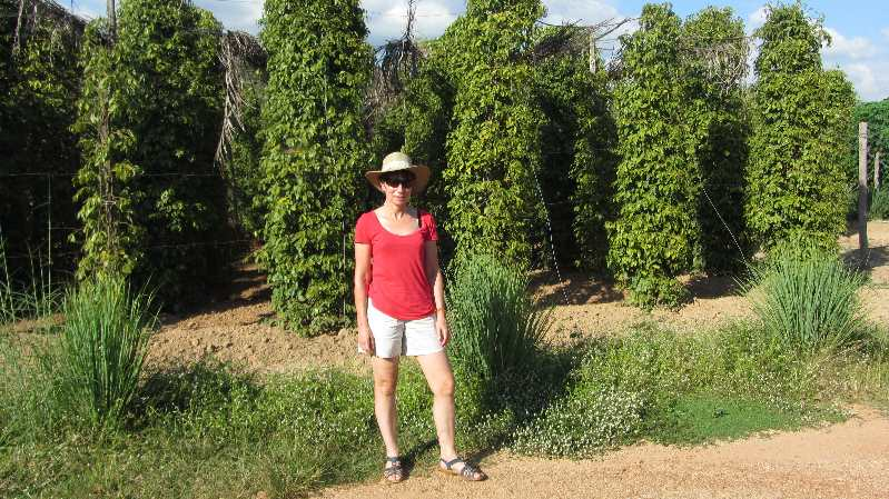 Jane standing in front of pepper plants on Cycling in Cambodia trip
